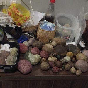 Menjual beragam jenis batu landak