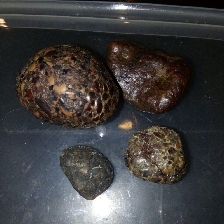 石盖利加刺猪作为一种药物许多好处