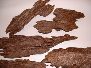 Sustainable Agarwood Production in Aquilaria Trees