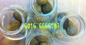 箭猪枣,豪猪枣 Porcupine Dates: முள்ளம்பன்றி தேதி