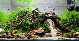 Gambar Batu Hias Aquarium - Batu Mania