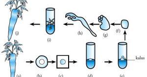 Inilah Pengertian dan Macam-macam Bioteknologi Modern lengkap