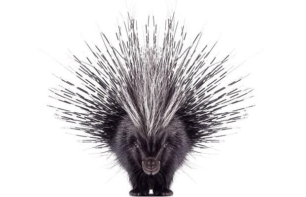 The Porcupine & The Cure For Cancer