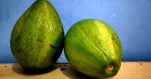 Manfaat buah alpukat ( Avokad )
