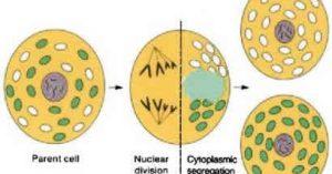 Plant Life: Extranuclear Inheritance