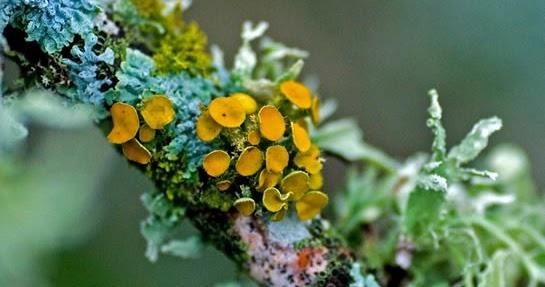 Plant Life: Lichens