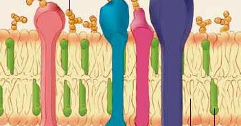 Plant Life: Lipids