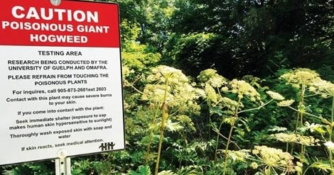 Plant Life: Poisonous and Noxious Plants